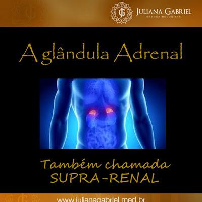adrenal1introducao
